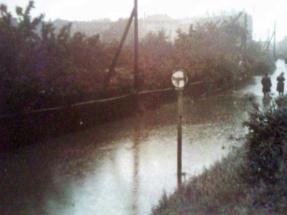 1954-5-g